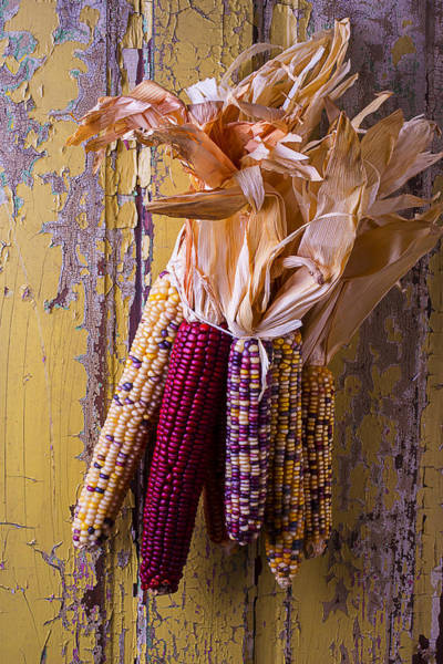 Indian Corn Photograph - Indian Corn by Garry Gay