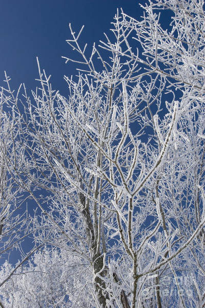 Photograph - Indiana Winter by Jim West