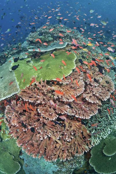 Schooling Fish Wall Art - Photograph - Indonesia, Komodo National Park, Tatawa by Jaynes Gallery