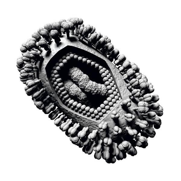 Influenza Virus Art Print