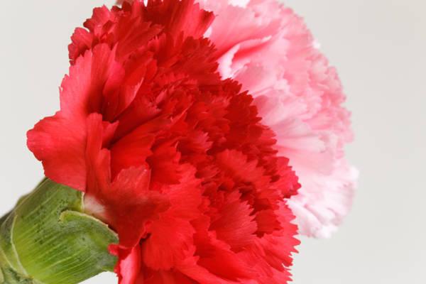 Photograph - Iris Flower by Peter Lakomy