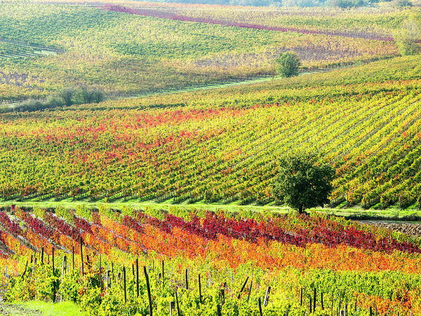 Away From It All Wall Art - Photograph - Italy, Montepulciano, Autumn Vineyard by Terry Eggers