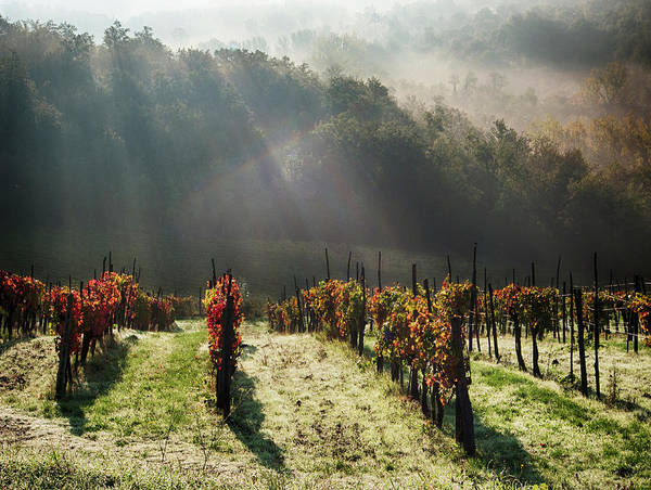 Away From It All Wall Art - Photograph - Italy, Tuscany, Chianti, Autumn by Terry Eggers