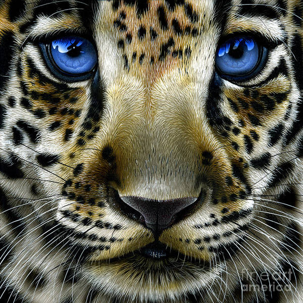 Wall Art - Painting - Jaguar Cub by Jurek Zamoyski