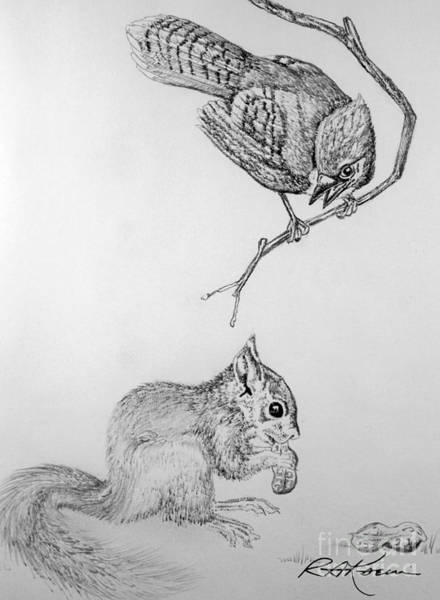 Furry Drawing - Jay Cock And Squirrel Kit by Roy Anthony Kaelin