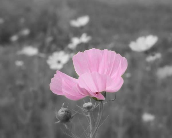 Photograph - Joyful Memories  by Kim Hojnacki