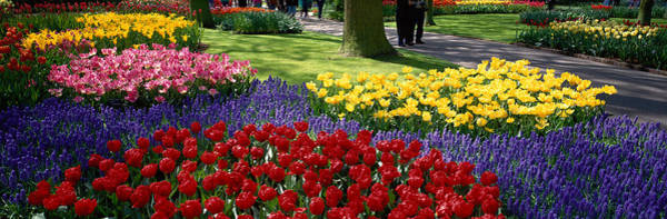 Wall Art - Photograph - Keukenhof Garden, Lisse, The Netherlands by Panoramic Images