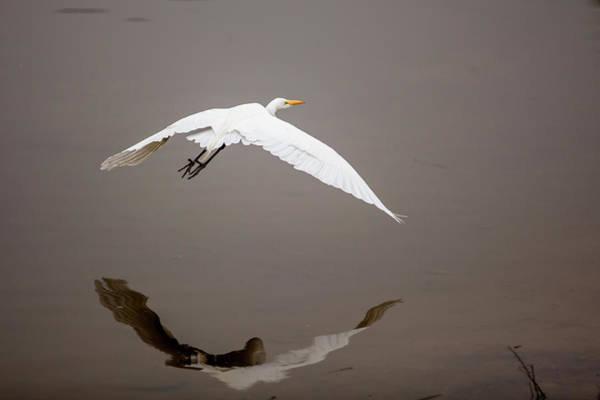 Ardea Photograph - Lake Murray, San Diego, California by Michael Qualls