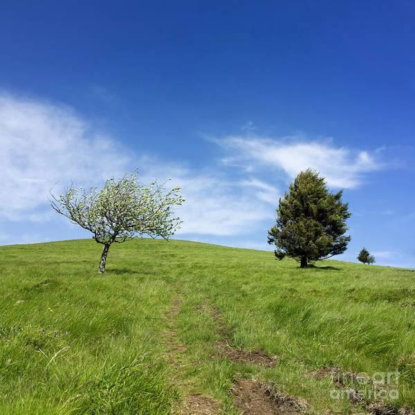 Apple Tree Photograph - Landscape by Bernard Jaubert