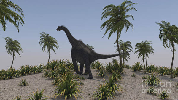 Digital Art - Large Brachiosaurus Roaming by Kostyantyn Ivanyshen