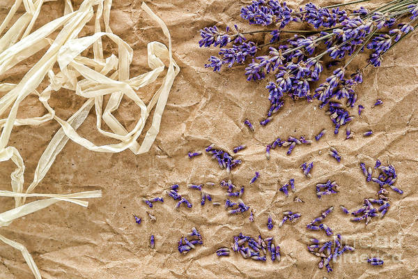 Photograph - Lavender Flowers And Seeds by Olivier Le Queinec