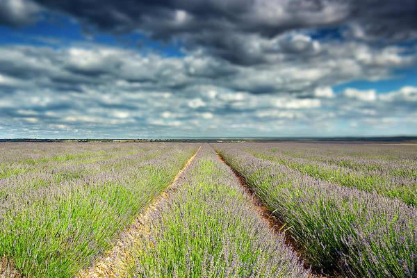 Paisaje Photograph - Lavender Plantation, Brihuega by David Santiago Garcia