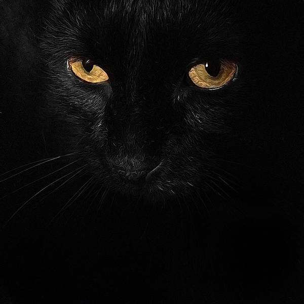 Photograph - Le Chat Noir by Natasha Marco