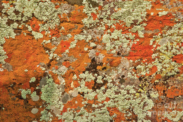 Photograph - Lichen Abstract by Mae Wertz
