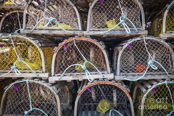 Traps Photograph - Lobster Traps by Elena Elisseeva