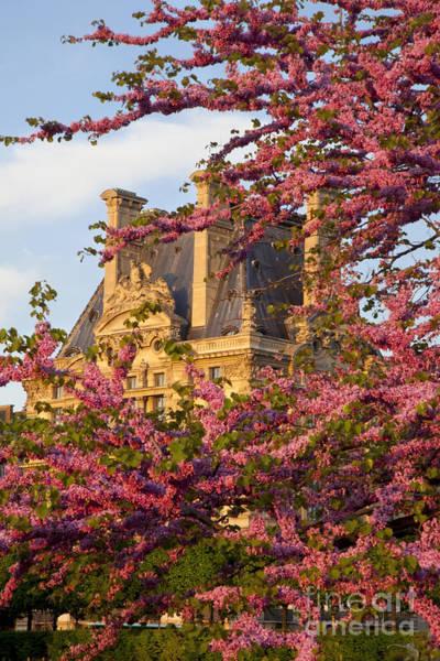 Jardin Des Tuileries Photograph - Louvre Blossoms by Brian Jannsen