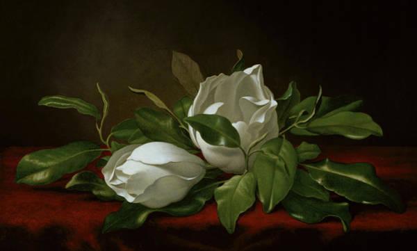 Wall Art - Painting - Magnolia by Martin Johnson Heade