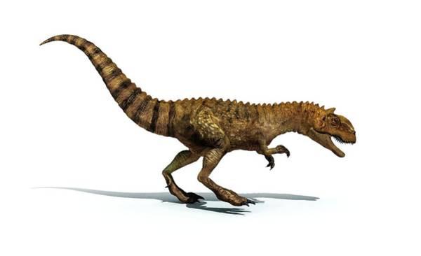 Abelisauridae Wall Art - Photograph - Majungasaurus Dinosaur by Mikkel Juul Jensen
