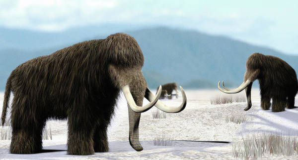 Wall Art - Photograph - Mammoth by Christian Darkin