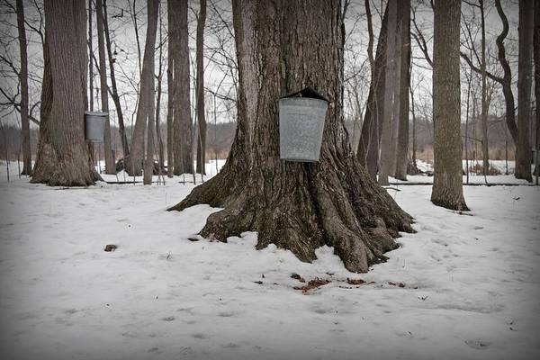 Bucket Photograph - Maple Sugaring by John Stephens
