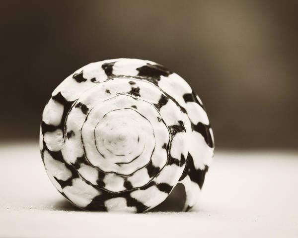 Wall Art - Photograph - Marbled Cone by Carolyn Cochrane