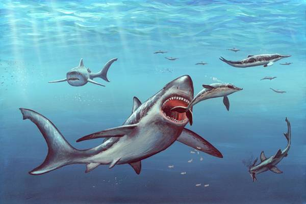 Wall Art - Photograph - Megalodon Prehistoric Shark by Richard Bizley