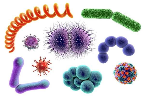 Escherichia Coli Photograph - Microbes by Kateryna Kon/science Photo Library