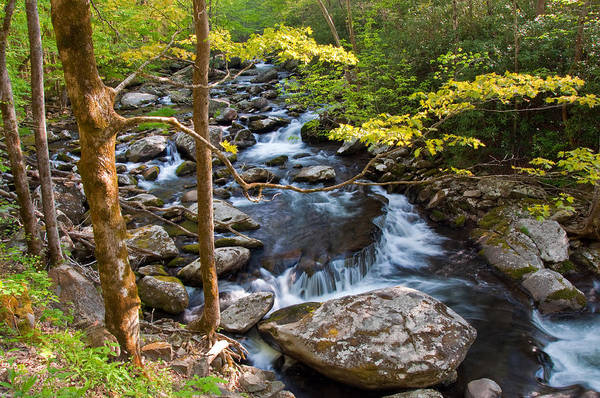 Photograph - Middle Prong Little River by Walt Sterneman