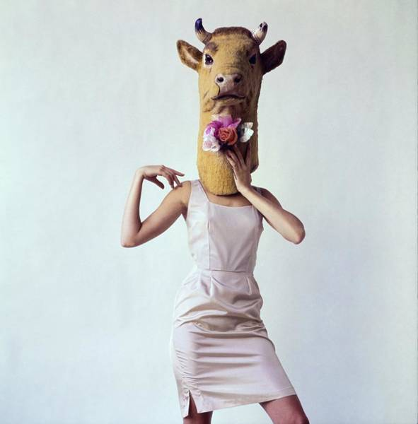 Wall Art - Photograph - Model Wearing A Cow Mask by Gianni Penati