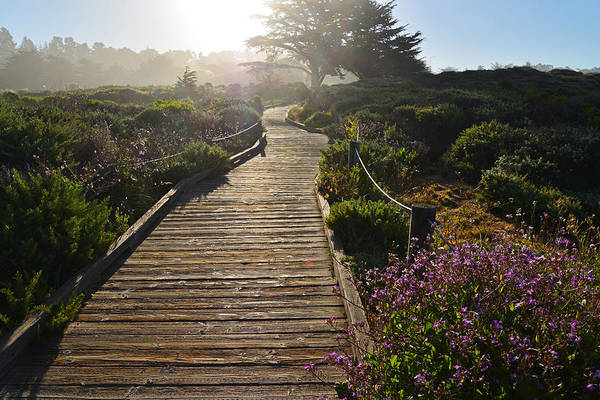 Cambria Photograph - Morning Glory by Lynn Bauer