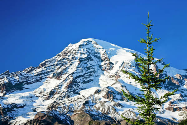 Photograph - Mt Rainier by Albert Seger