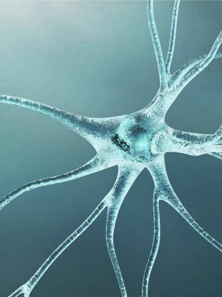 Neurobiology Photograph - Nerve Cell by Alfred Pasieka/science Photo Library