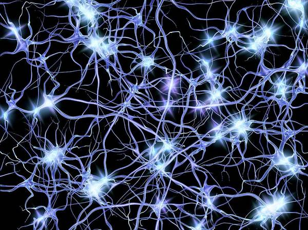 Wall Art - Photograph - Nerve Cells Firing by Alfred Pasieka/science Photo Library