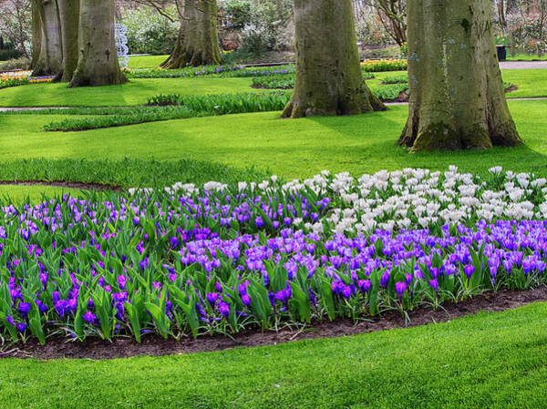 Keukenhof Photograph - Netherlands, Flower Displays by Terry Eggers