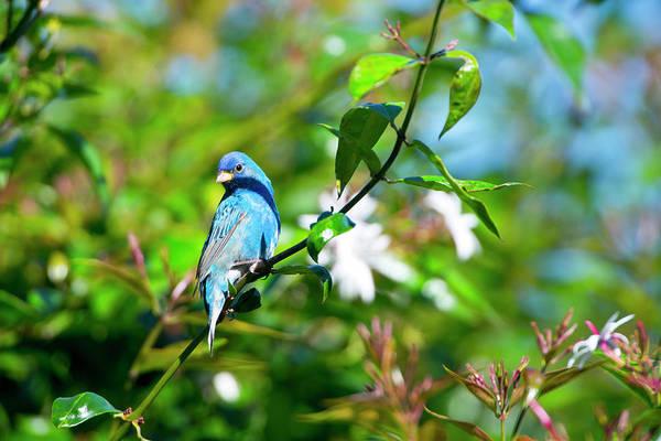 Jasmine Photograph - North America, Usa, Florida, Immokalee by Bernard Friel
