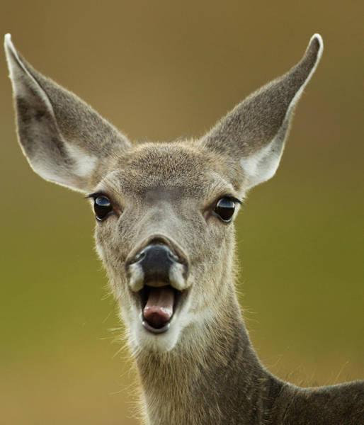 Mule Deer Photograph - North America, Usa, Wyoming by Joe and Mary Ann Mcdonald