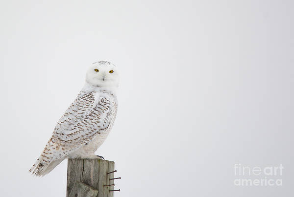 Holiday Photograph - Observant by Cheryl Baxter