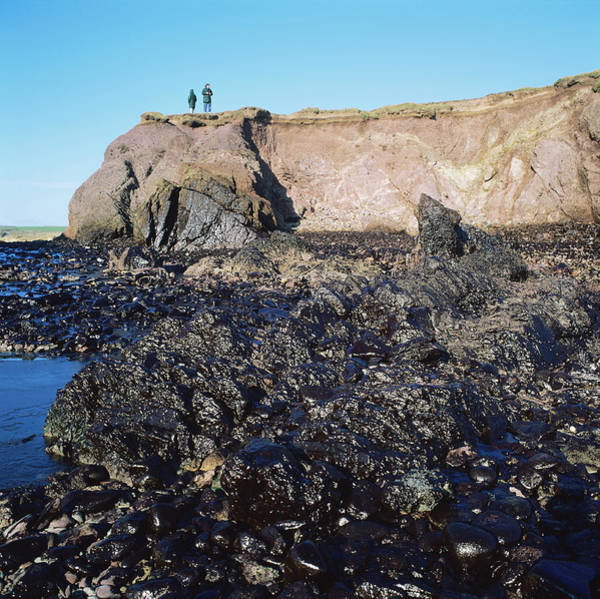 Milford Photograph - Oil Pollution by Robert Brook/science Photo Library