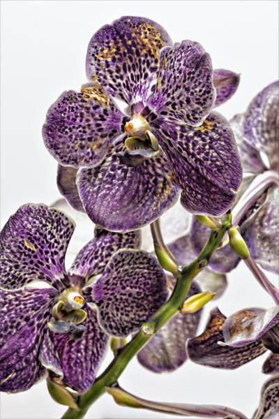 Orchid Study Art Print