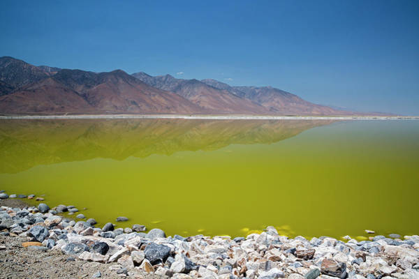 Wall Art - Photograph - Owens Lake Rejuvenation by Jim West/science Photo Library