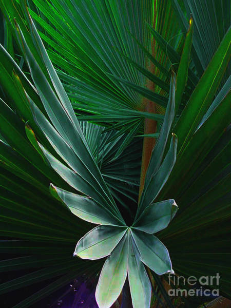 Photograph - Palm Frond by Susanne Van Hulst