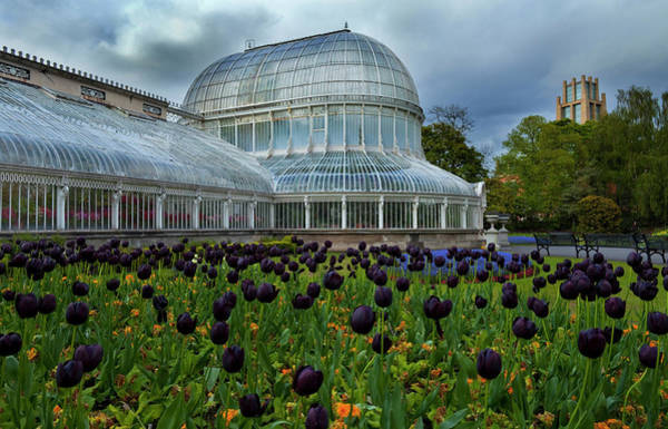 Glasshouse Photograph - Palm House In The Botanic by Panoramic Images