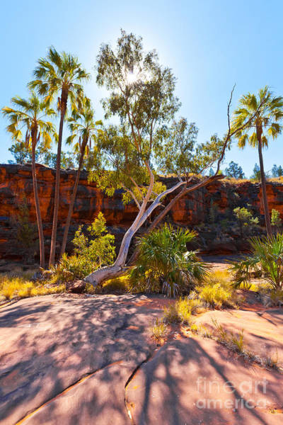Central Australia Photograph - Palm Valley  by Bill  Robinson