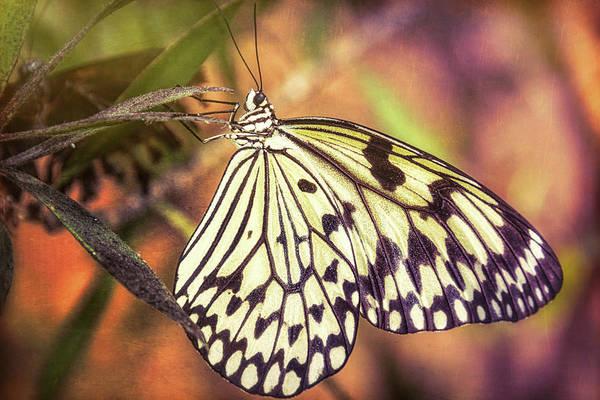 Kite Photograph - Paper Kite Butterfly  by Saija  Lehtonen
