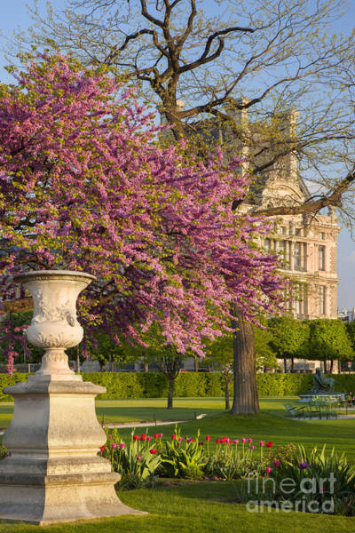 Jardin Des Tuileries Photograph - Paris Springtime by Brian Jannsen