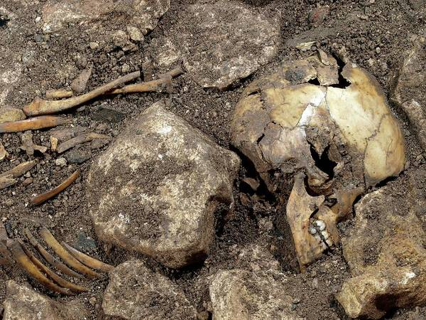 Homo Sapiens Photograph - Partially Excavated Human Fossil by Javier Trueba/msf