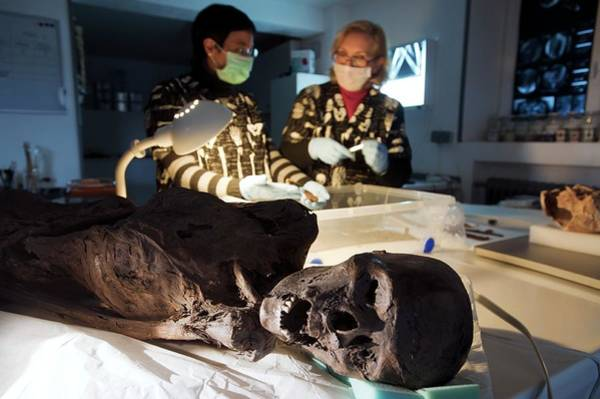 Castillo Wall Art - Photograph - Peruvian Mummy Research by Marco Ansaloni / Science Photo Library