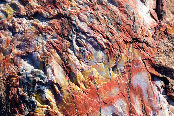 Petrified Wood Photograph - Petrified Forest by Jim West/science Photo Library