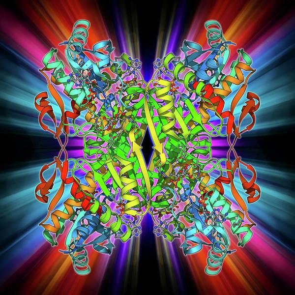 Bacilli Wall Art - Photograph - Phosphofructokinase Bacterial Enzyme by Laguna Design