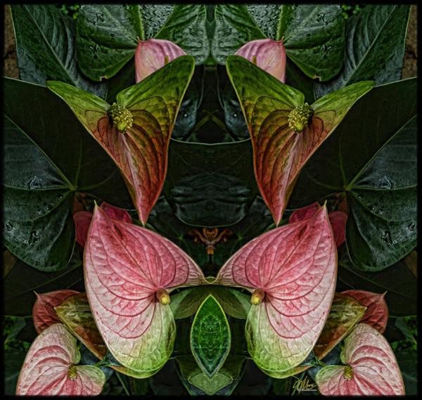 Photograph - Phyto-photo 1 by Douglas MooreZart